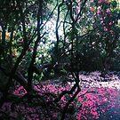 Moorlands Nature reserve Skelton York by Merice Ewart Marshall - LFA