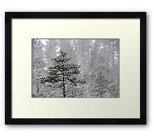 23.1.2015: Pine Trees in Blizzard I Framed Print