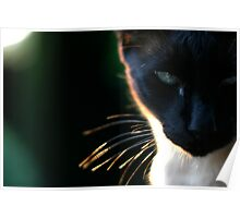 Electric Whiskers Poster