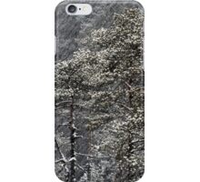 23.1.2015: Pine Trees in Blizzard II iPhone Case/Skin