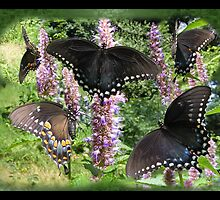Black Swallow Tail Collage by Andy2302