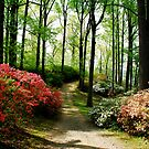 A Quiet Walk by Lois  Bryan
