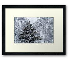 23.1.2015: Pine Trees in Blizzard IV Framed Print