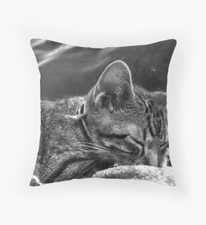 Kitten Sleeping Throw Pillow
