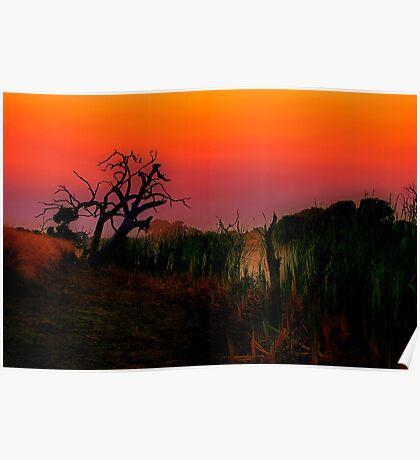 """Creekside at Dawn"" Poster"