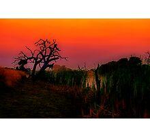"""Creekside at Dawn"" Photographic Print"