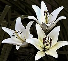 Lilies by Joy  Rector