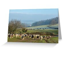 Herdwick sheep grazing in winter Greeting Card