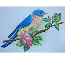 Bluebird Perched Amongst Flowers Photographic Print