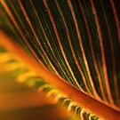 leaf by Pino
