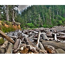 log jam Photographic Print