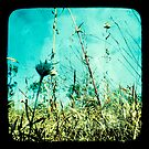 Tall Grass by Jules Campbell
