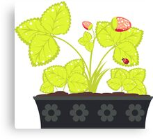 Strawberry in Flower Pot Canvas Print