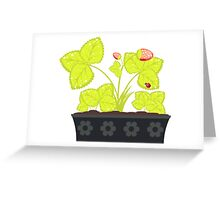 Strawberry in Flower Pot Greeting Card