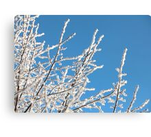 frost trees covered against the blue sky Canvas Print
