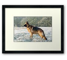 A German Sheperd in the frost Framed Print
