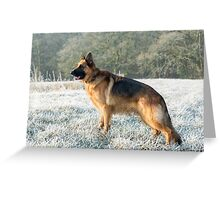 A German Sheperd in the frost Greeting Card