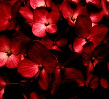Red Flowers Bouquet in Black Background Photography by DFLC Prints