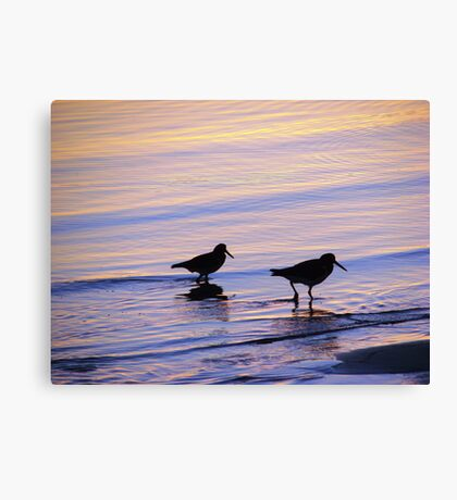 Purple & Blue Pied  Sooty Oystercatcher Sunset Canvas Print