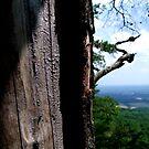 A Tree at Pilot Mountain by Lolabud