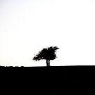 Bird Tree by Alexander Isaias