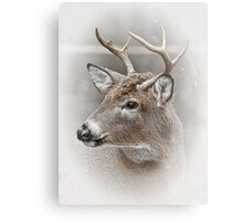 Whitetailed Deer Buck Metal Print