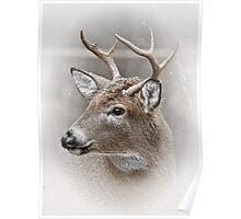 Whitetailed Deer Buck Poster