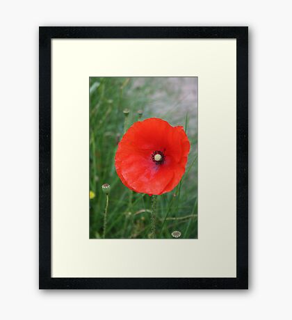 In Flanders Field Framed Print
