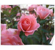 Flower 004 Poster