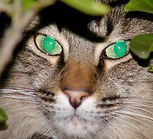 Mr Kitty Camoflauge by nosajnybor