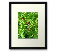 Green! With Red Framed Print
