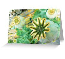Poppy Bulb Greeting Card