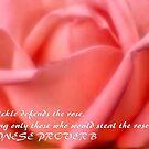 """""""Isa Cartens"""" Rose - Antico Moderno (tm) Rose by Magriet Meintjes"""