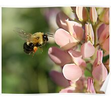 Bumble Bee in Flight Poster