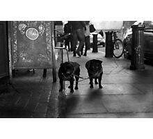 The Twins Photographic Print