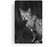 """Chat - Cat """" Peluche """" 05 (c)(h) ) by Olao-Olavia / Okaio Créations 300mm f.2.8 canon eos 5 1989 Canvas Print"""