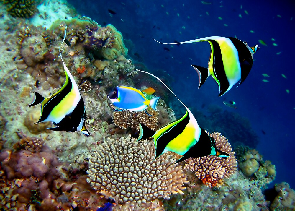 MOORISH IDOLS - MALDIVES by Michael Sheridan