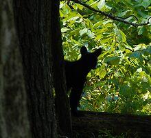Wilderness Cub by David Lee Thompson