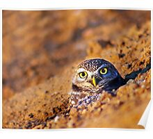 Owl in the Burrow Poster