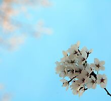 Apple blossoms by Jackco  Ching