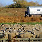 Basque Sheep Herders by trueblvr
