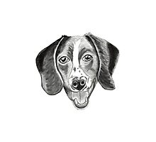 Boomer the barfing barking ball-obsessed beagle Photographic Print