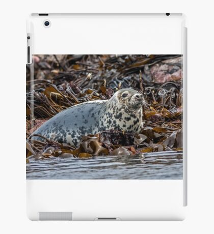 Seal iPad Case/Skin