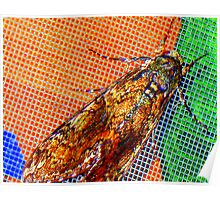 Gypsy moth Poster