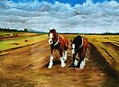Draft Horses: Oxley Island NSW by louisegreen
