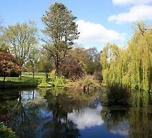 Irelands Japenese Gardens by John Quinn
