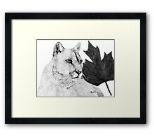 Canadian Cougar Framed Print