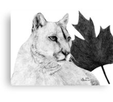 Canadian Cougar Canvas Print