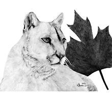 Canadian Cougar Photographic Print