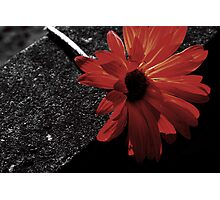 red on black Photographic Print